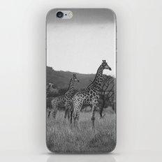 Kaleidoscope of Giraffes iPhone & iPod Skin