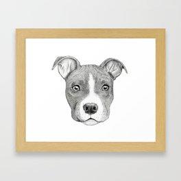 Staffordshire Terrier Dog Framed Art Print
