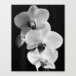 Orchids in black and white Canvas Print