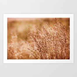 Clump of grass inflorescence sepia toned Art Print