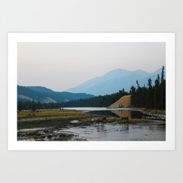 Dreamy Elk Sunset Art Print