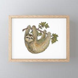 Sloth on a Branch Framed Mini Art Print