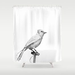 Albino Blue Jay - Square Format Natural History Bird Portrait Shower Curtain