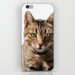 Portrait Of A Cute Tabby Cat With Direct Eye Contact Isolated iPhone Skin