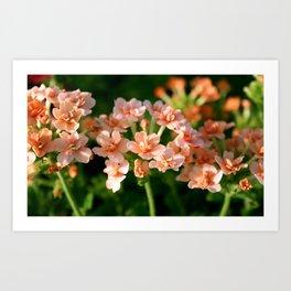 Double Peach Flowers Art Print
