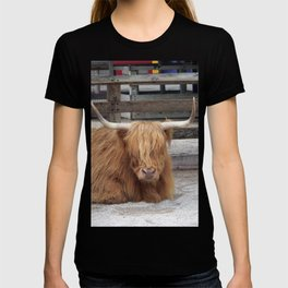 My Name is Shaggy. Is Anyone There? T-shirt