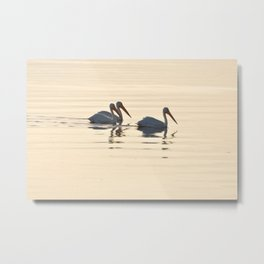 WHITE PELICANS ON THE SALTON SEA Metal Print