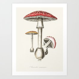 The Real Mushroom Art Print