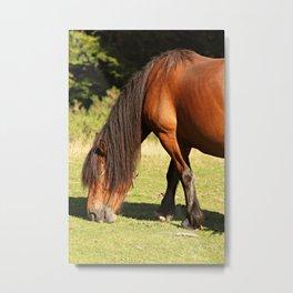 Horse eating Metal Print