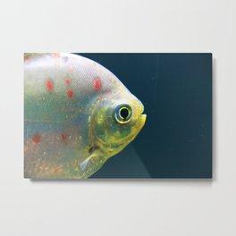 One Fish Metal Print