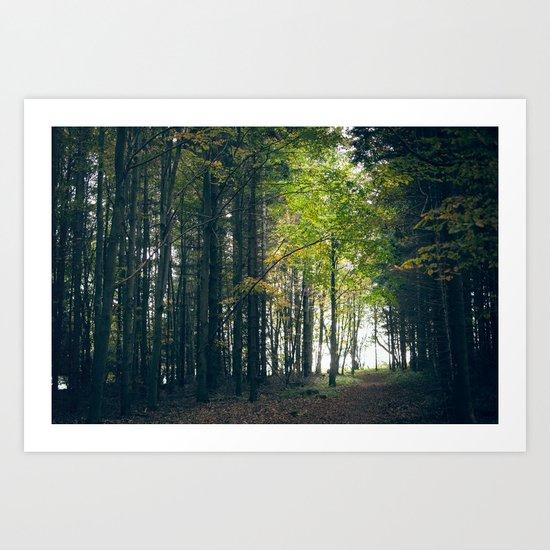 young tree Art Print