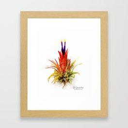 Tillandsia IO Ionantha Air Plant Watercolors Framed Art Print