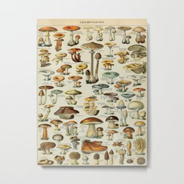 Mushrooms Vintage Scientific Illustration French Language Encyclopedia Lithographs Educational Metal Print
