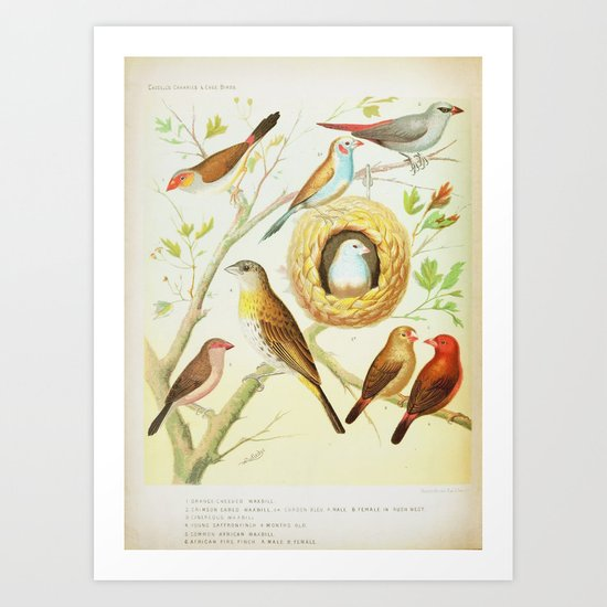 Colorful Vintage Birds  Art Print