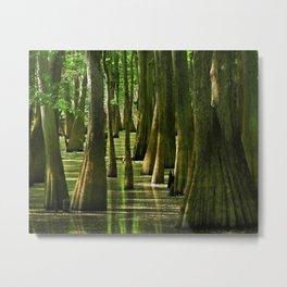 Cypress Light Metal Print