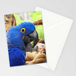 Hyacinth Macaw Stationery Cards