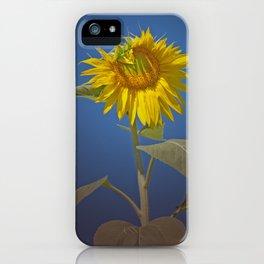 Sunflower in Spotlight iPhone Case