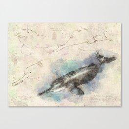 The Scientific Sketchbook: Baiji Dolphin Canvas Print
