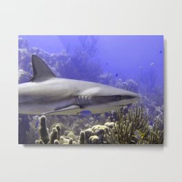 Shark Swimming Past Metal Print