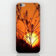 Goodnight Sun iPhone & iPod Skin