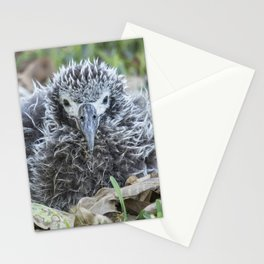 Laysan Albatross Chick, No. 1 Stationery Cards