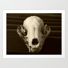 raccoon skull 2016 III Art Print