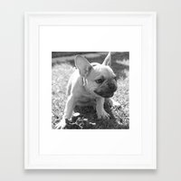 french bulldog Framed Art Prints featuring French Bulldog by Kathleen Follert