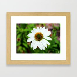 White Coneflower Framed Art Print