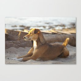 Zanibar Beach Dog Canvas Print
