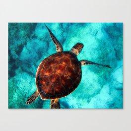 Marine sea fish animal Canvas Print