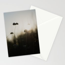 flowers silhouetted against the morning light ... Stationery Cards