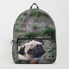 Pug Backpack