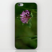 clover iPhone & iPod Skins featuring Clover by Dorothy Pinder
