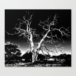 Biloxi Tree Canvas Print