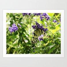 Butterfly - 1 Art Print