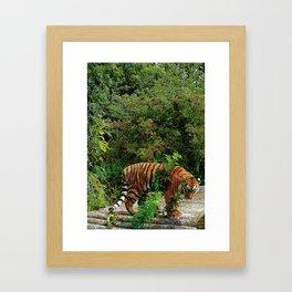 Colourful Tiger Framed Art Print