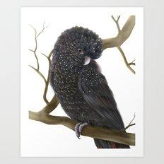 Glossy Black Cockatoo Art Print