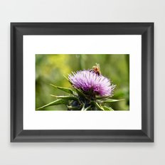 Bee in the right place (at the right time) Framed Art Print