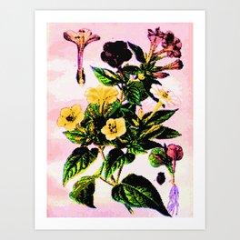 11653536886 Art Print