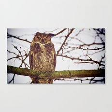 The Disgruntled Owl  (2012) Canvas Print