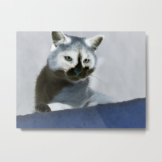Blue Snow Shoe Cat on the Prowl Metal Print