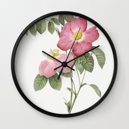 Pink French Rose also known as Provins Rosebush with Pink and Simple Flowers (Rosa gallica rosea flo Wall Clock