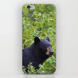Black bear in Jasper National Park, Canada iPhone Skin