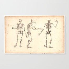 Vintage 1833 Human Skeleton Anatomy Print Canvas Print