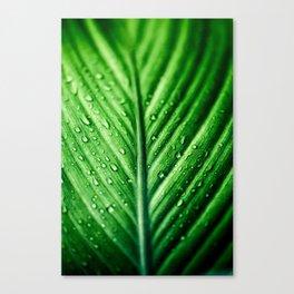 Rainy Days 7 Canvas Print