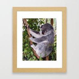 Mr Koala Framed Art Print
