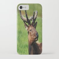elk iPhone & iPod Cases featuring Elk by Tianna Chantal