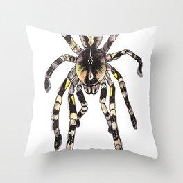 P. striata Throw Pillow