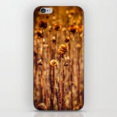 Sunflower Heads in the Winter Sun iPhone & iPod Skin