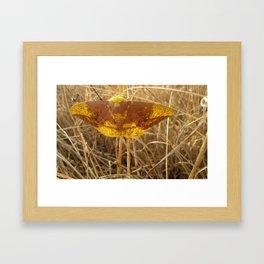 Imperial Moth Framed Art Print